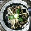 Тушеная спаржевая фасоль с грибами