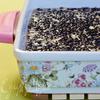 Запеканка-обманка с двумя видами чечевицы