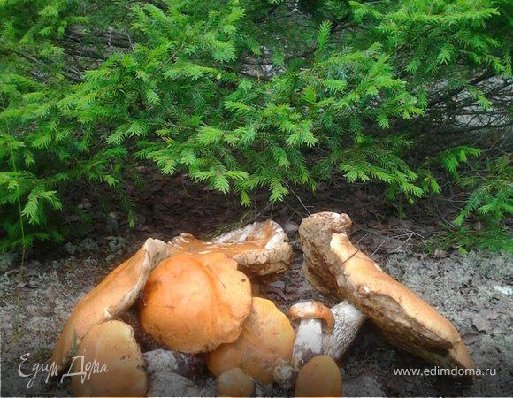 Созрел вопрос: как вы относитесь к грибам?