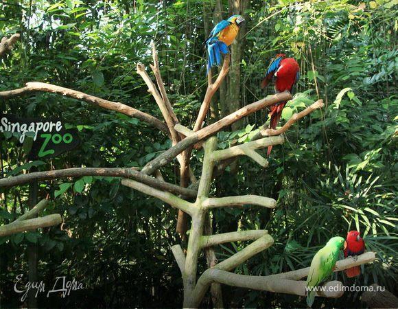 Моя сингапурская сказка. Singapore Zoo (продолжение)