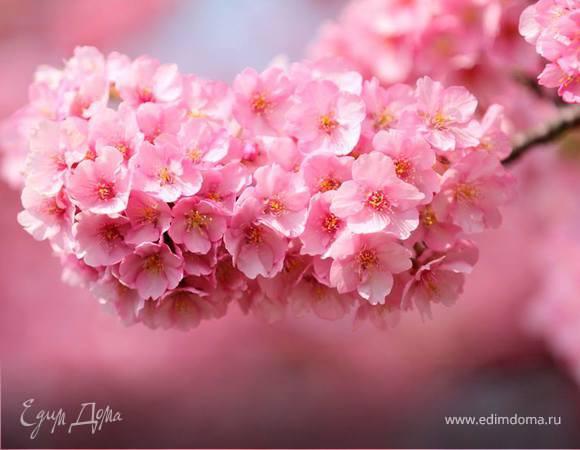 С Весной вас всех, друзья!!