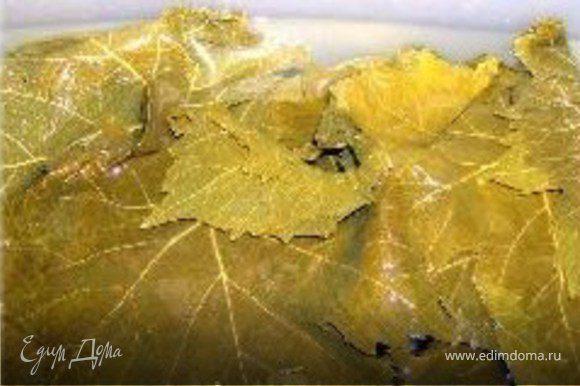 Листья аккуратно развернуть и окунуть в воду на неск минут.