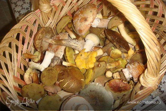 Грибы почистить, помыть, порезать на приемлемые для вас кусочки(не сильно мелко, ведь после варки грибы уменьшатся в размере!) и закипятить в подсоленой воде. поварить минут 10-15