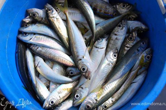 Мы обычно привозим с морской рыбалки пару-тройку таких ведрышек