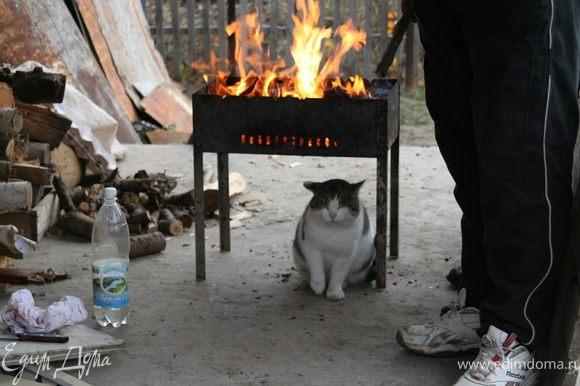 Закладываем в мангал дрова или готовые угли, заливаем специальной жидкостью для розжига и поджигаем. Ждем пока кот согреется... То есть когда огонь погаснет и угли не станут тлеть.