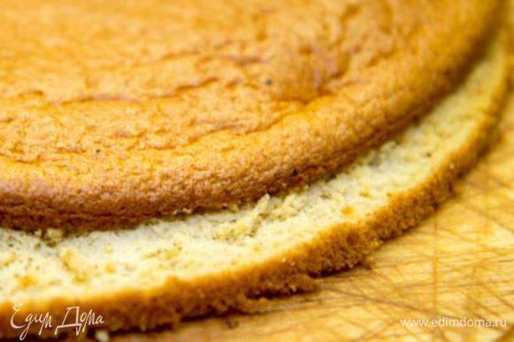Бисквит: Разогреваем духовку до 200 С. Отделяем белок от желтка. Желток взбиваем с пралине и горячей водой. Взбиваем белок со щепоткой соли в устойчивую пену. Теперь в миску с белком выкладываем желтковую смесь, добавляем муку. Аккуратно, но уверенно перемешиваем и выкладываем получившееся тесто в форму (диаметром 20 см) застеленную пергаментом. Выпекаем 8-10 минут. Даем остыть. В идеале бисквит должен постоять 8 часов, тогда при нарезании он не будет крошиться. Разрезаем бисквит на 2 части.