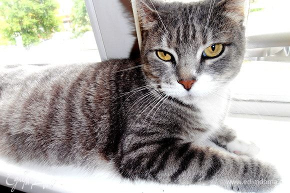 Вместо кота сегодня на кухне дежурит кошка Дуся)))