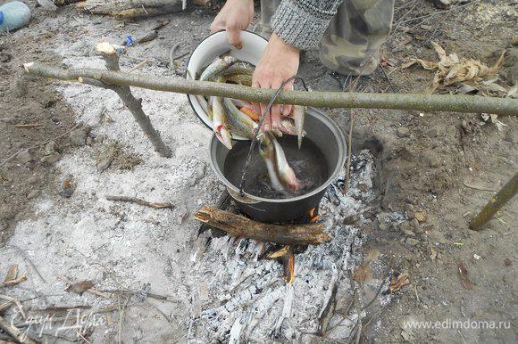 В казанок наливаем воду, ставим на огонь, закладываем очищенную рыбу, солим, доводим до кипения, собираем пенку. Варим, желательно на медленном огне, хотя огонь костра регулировать сложно. Готовую рыбу вынимаем.