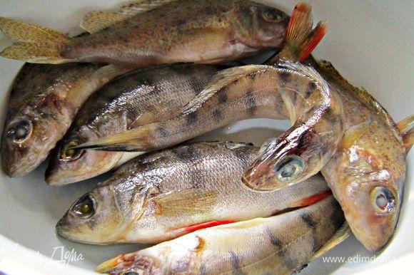 Из мелкой рыбки сварить бульон, добавив соль, 1 луковицу и специи: горький и душистый перец, лавровый лист. Этот шаг не обязателен, но дальше вы поймёте, что я решила его включить не только потому, чтобы использовать мелкую рыбёшку и порадовать мужа-рыбака, но и для того, чтобы усилить рыбный вкус блюда.