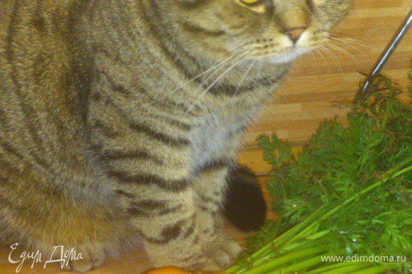 Морковочку моем, тут у меня помощник по хозяйству, очень любит нюхать морковную ботву, не смогла удержаться, чтобы не сфотографировать.