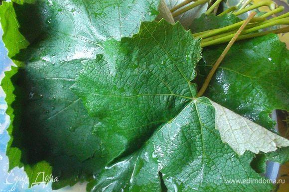 Виноградные листья хорошо промываем. Если листья молодые, то используем так. Если же не очень молодые, то лучше ошпарить кипятком.