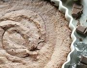 Шоколадный торт с имбирем