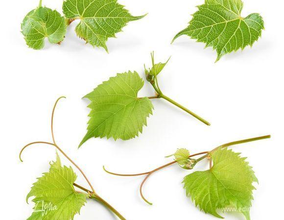 Виноградные листья молодые