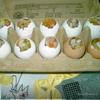 Яйцо заливное