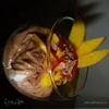 Шоколадный мусс с манго и перчиком чили