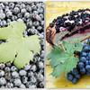 Скьяччата с виноградом (Schiacciata all'uva)
