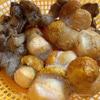 Щи из свежей капусты с грибами