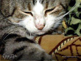 Святая к музыке любовь! Страсть кота Ди-Джея!
