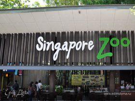 Моя Сингапурская сказка. Singapore ZOO.
