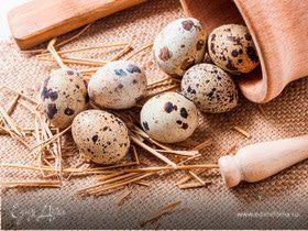 Перепелиные яйца: о пользе и вкусе