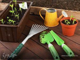 Как вырастить огород на подоконнике. Практические рекомендации