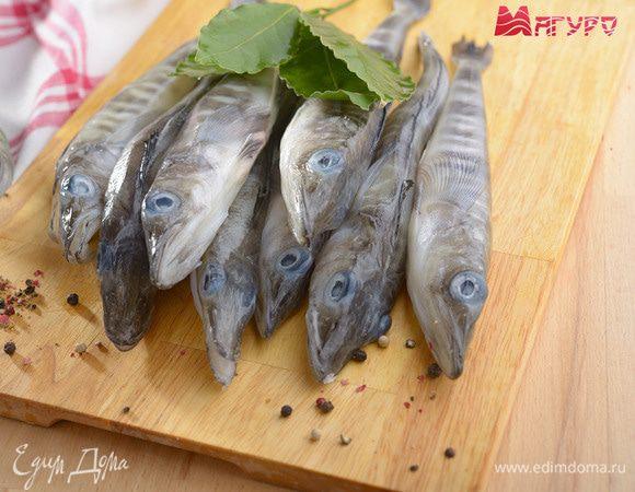 7 интересных фактов о ледяной рыбе