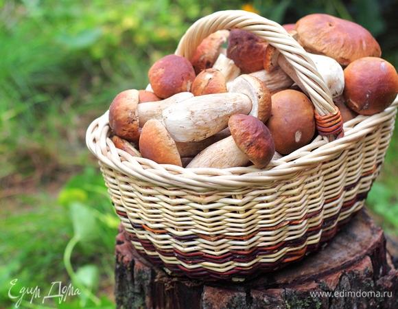 Собираем урожай: сможете ли вы отличить ложные грибы от настоящих?