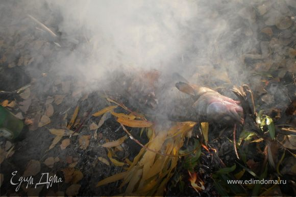 Развести костер, судака подвесить на дерево, чтоб просох. Когда дрова перегорят одеваем судака на палку и на огонь. Переворачивая жарить до готовности. В конце сорвать листья осоки бросить в костер и прокаптить судака 10 минут. Приятного опетита!