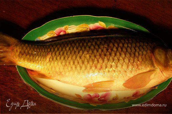 Картошку порезать тонкими кольцами, лук тоже кольцами. Ребу помыть, выпотрошить, форму застелить фальгой (чтобы потом можно было этой же фальгой закрыть рыбу сверху), затем на фальгу выложить слой сметаны, затем слой картошки, потом слой лука, посолить, поперчить, выдавить немного чеснока. Теперь выкладываем сверху рыбу, в рыбу натолкать зелень (петрушку, укроп). Сверху опять слой сметаны, лука, картошки, посолить, поперчить и посыпать сыром. Закрыть фальгой и выпекать в разогретой до 180 °С духовке минут 30-35. Приятного аппетита!