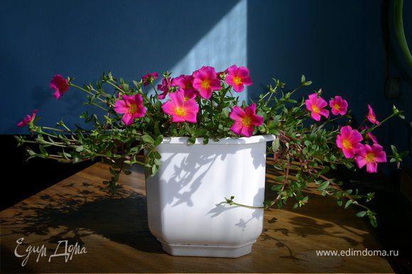 Что такое портулак? = http://www.raananadiet.com/article10.html Можно выращивать в вазоне... мы едим всю зиму с подоконника а летом с цветника...
