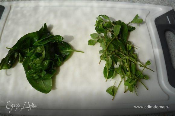 Майоран и базилик промыть, высушить, нащипать листья и мелко порубить.