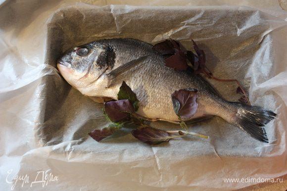 Это тоже простой рецепт. Берем рыбу,выпотрошим ее,очистим от чешуи и тщательно промоем и обсушим. Посолим,поперчим,сбрызнем соком лимона и уложим в противень,застеленный пергаментом. Вокруг обложим листиками базилика.