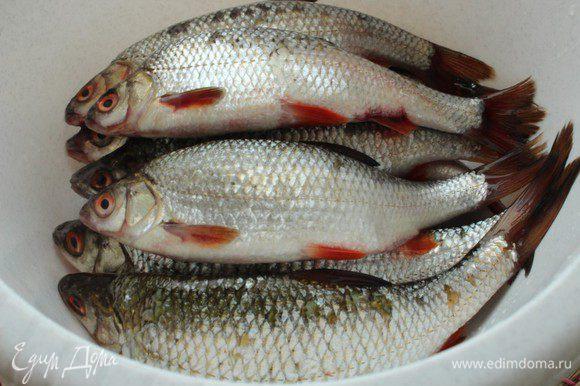 Если вы покупаете рыбу в магазине или на рынке, а не выловили ее сами, обязательно проверьте ее свежесть... Жабры должны быть розовыми и без налета, а взор рыбины должен быть ясным. Никаких мутных глаз!!!