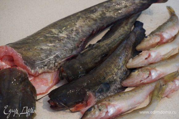 Рыбу (1 кг сома, 0,5 кг ерша) почистить и хорошо помыть. Сбрызнуть соком лимона, через 20 минут еще раз хорошо промыть (убиваем запах тины).