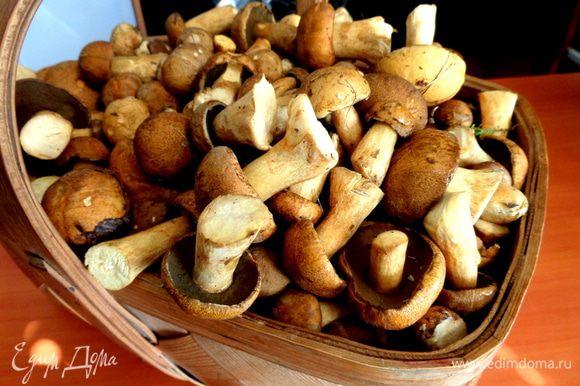 Идём в лес,собираем грибы,приносим домой))) На этот раз сын принёс из леса моховички.