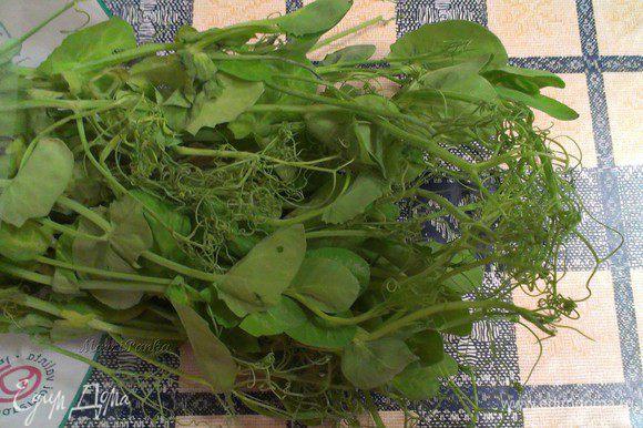 Побеги зеленого горошка очень хорошо сочетаются с любыми блюдами из рыбы, а также подходят для салатов из овощей.