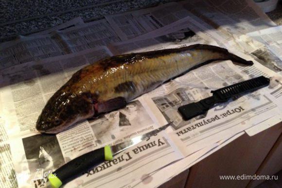 Единственная исключительно пресноводная рыба отряда трескообразных. Чистим как зайца – после надрезов вокруг головы, «чулком» при помощи плоскогубцев снимаем шкуру.