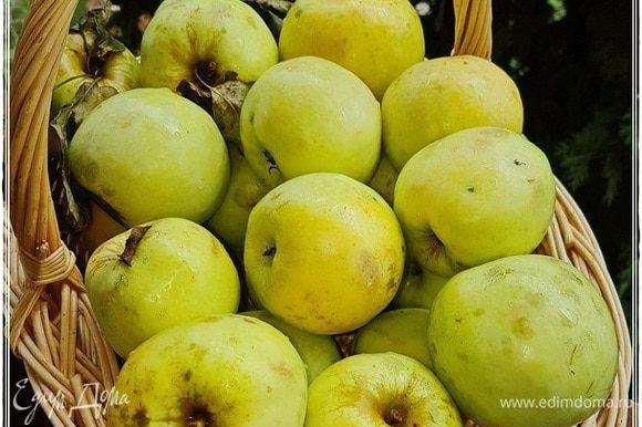 Конечно, чтобы пастилу приготовить, надо, во-первых, яблоки с дерева собрать, домой принести и помыть, конечно. Хоть они и из своего сада и ничем не обрабатывались химическим, но все же. В общем, вымойте обязательно.