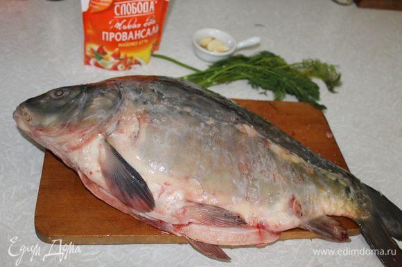 Карпа почистите, выпотрошите, удалите жабры, промойте холодной водой, обсушите полотенцем, и внутри и снаружи посыпьте солью. Отправьте рыбу в холодное место и займитесь начинкой.