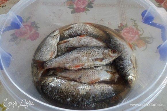Рыба через 24 часа.