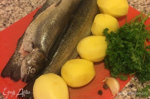 Рыбу вымыть и обсушить бумажным полотенцем. Нарезать рыбу, картофель и зелень.