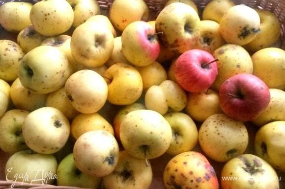 Яблоки садовые очистить.