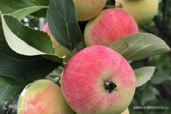 Одно яблоко нарезаем на тоненькие дольки и выкладываем веером на дно смазанной сливочным маслом формы, припыляем корицей, остальные яблоки нарезаем кубиком, добавляем в тесто, получившуюся массу выкладываем в форму.
