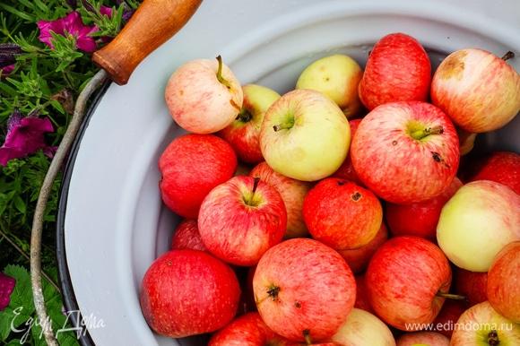 Из данного количества ингредиентов у меня получилось 3 банки по 500 г и 4 банки по 350 г. Начнем приготовление. Яблоки хорошо промыть.