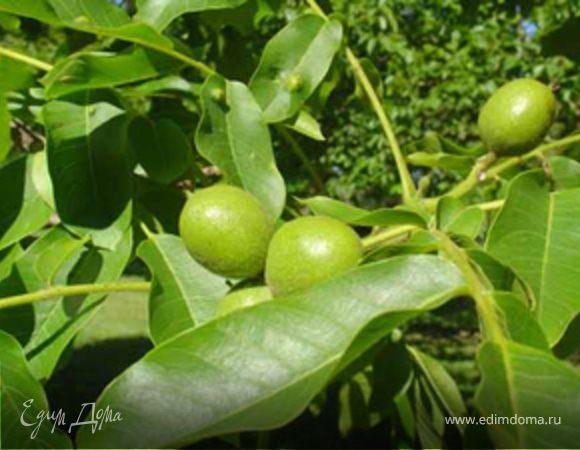 Варенье из зеленых (не спелых) грецких орехов.