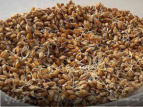 Пророщенные зерна пшеницы - кладезь витаминов!