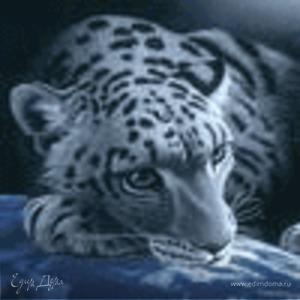 tigriza-wild