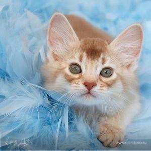 Кошка-ма